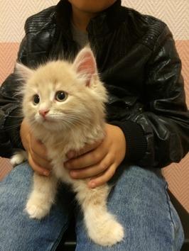 Mio hos veterinären, 9 veckor