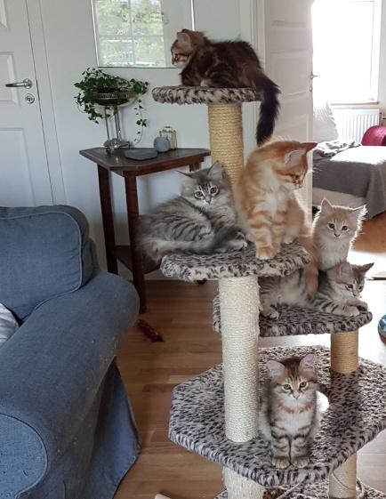 Alla samlade för ett gruppfoto