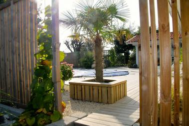 Vår palm, planterad i isolerad kruka och står kvar över vintern.