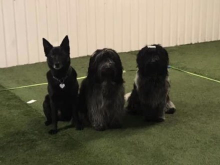 Ewa med sina egna hundar
