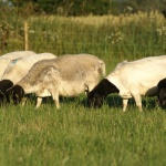 Nice flock