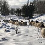Lovley winterday
