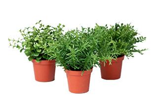 Gröna miniväxter