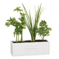 Trälåda - Min kryddträdgård