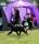 Terese & Yava svävar runt i ringen