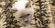 Katt kattpensionat Lund