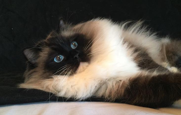 Kattpensionat Happy Katthotell är ett litet nybyggt kattpensionat i Bjärred i västra Skåne. Ett kattpensionat med lugn & trygg miljö för din katt!