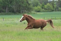 Häststaty