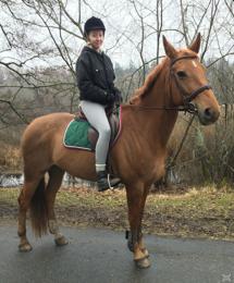 Hästen Stina från Swartlings