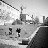 Trädgårdsarbete i Abessinen 40-tal. Foto: Stockholmskällan
