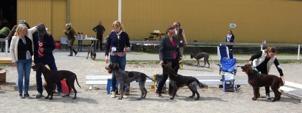BIS 1-4 med domare Anki Johansson. Foto: M Hagman