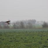 Fågel i luften
