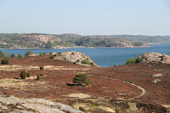 """200 m vom Haus erstreckt sich das Naturreservat """"Bua hed"""", welches eine der am besten bewahrten Küstenheiden mit Heidekraut im Bohuslän ist. Die Heide liegt auf einem Sandsediment, welches  die Flora auf diesem Grund recht empfindsam macht. Heidekraut und Krähenbeere dominieren dieses Gebiet. Hier gibt es viele schöne Badstrände und von den Anhöhen erhält man eine grossartige Aussicht über die Fjordlandschaft. Für einen Spaziergang bietet sich hier eine 4 km lange Runde an, die Sie durch diese Heide führt."""