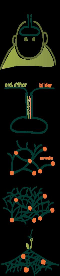 Bilderna föreställer arbetsminnet och långtidsminnet i förhållande till varandra, samt nervceller, kopplingar och minneskrokar.