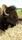 Bisontjuren Sitting Bull