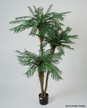 Palm 3st stammar 190cm - Palm 3st stammar 190cm
