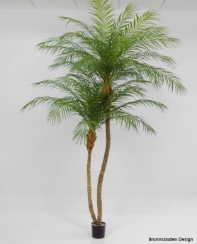 Phoenix palm 240 cm - Phoenix palm 240 cm