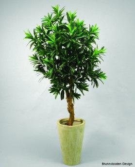Croton 90cm - Croton 90cm