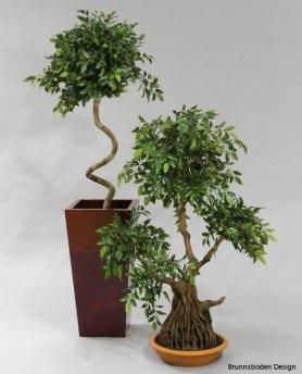 Bonzai 100cm - 99-100 Bonzai