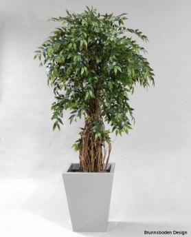 France Ficus 170cm - 1035-170 France Ficus