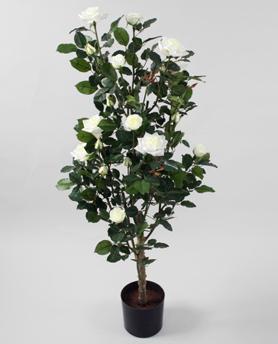 Rosetree Cream 120cm - Rosetree cream 120cm