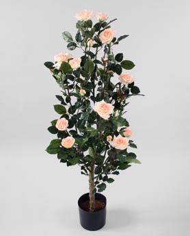Rosetree Pink 120cm - Rosetree Pink 120cm