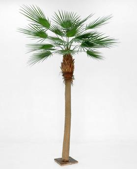 Whasingtonia palm 270 cm - 1208-270 whasingtonia palm