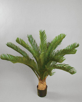 Cycaspalm 110cm - Cycaspalm 110cm