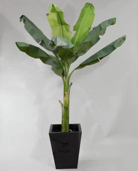 Banana 210 cm - Banana 210 cm