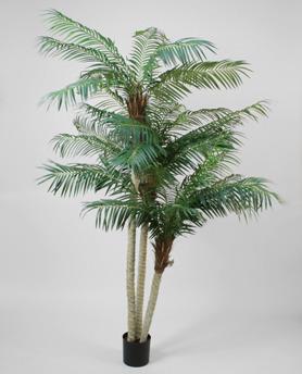 Phoenix Palm 230 cm - Phoenix Palm 230 cm