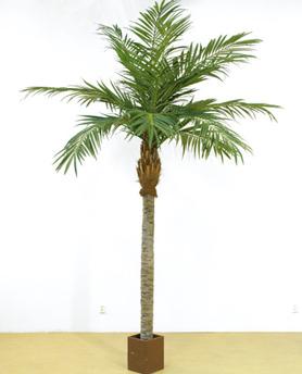 Majesty Palm Höjd 300 cm - Majesty Palm Höjd 300 cm