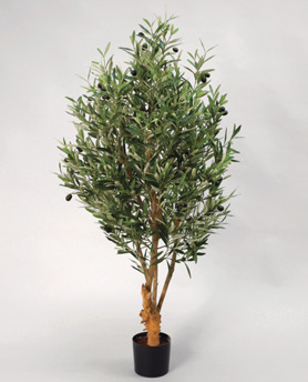Olivträd 170cm - Olivträd 170cm