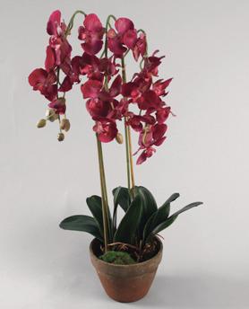 Phalanopsis Red 75cm - 842-3 Phalanopsis Red 75cm