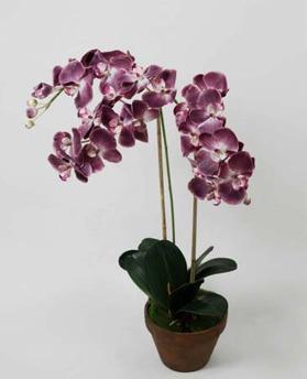 Orchid Phalanopsis Purple 75cm - 842-6 Orchid Phalanopsis Purple 75cm