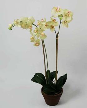 Orchid Phalanopsis Yellow 75cm - 842-5 Orchid Phalanopsis Yellow 75cm