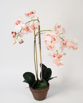 Orchid Phalanopsis pink 75cm - 842-2 Orchid Phalanopsis 75cm