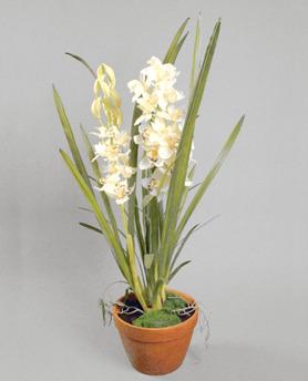 Cymbidium Orkide 110cm - 840-1 Cymbidium Orkide 110cm