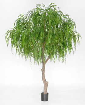 Weeping Willow 350 cm - 1209-350 Weeping Willow