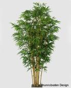 New bamboo Höjd 360 cm