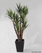 Yucca 216cm