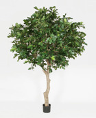 Oak Tree 270cm