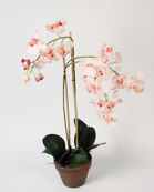 Orchid Phalanopsis pink 75cm