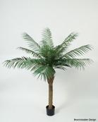 Phoenixpalm 150 cm