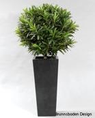Croton Ball Höjd 100cm