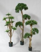 Podocarpus 115cm