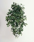 Murgröna Sage 80 cm