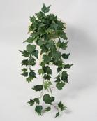 Murgröna 6-pack 45cm