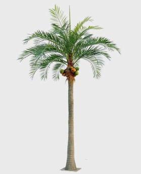 Coconut Palm 590 cm - Coconut Palm 590 cm