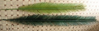 Coconut Palmblad set/16 - 9500 Palmblad Coconut Palm i set