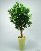 Croton 120cm